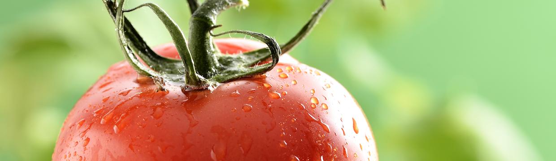Tomate ADAMA
